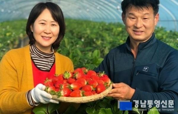 통영 명품딸기 본격 출하3.jpg